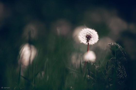Flickr cc Seyed Mostafa Zamani
