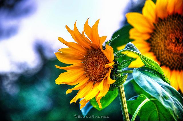 Flickr CC Rachel Samanyi